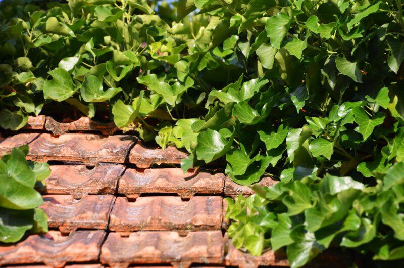 Dachówka włókienno-cementowa na dachach i elewacjach wielu domów
